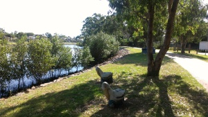 Throsby creek - pelicans