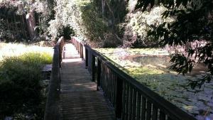 rocky creek dam_1